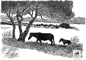 Disegno della Giara con cavallini