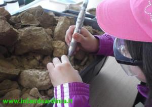 Laboratorio di paleontologia
