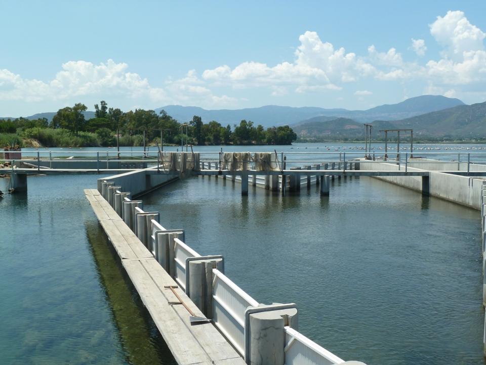 Particolare Laguna di Tortolì (Foto Gianna Saba)